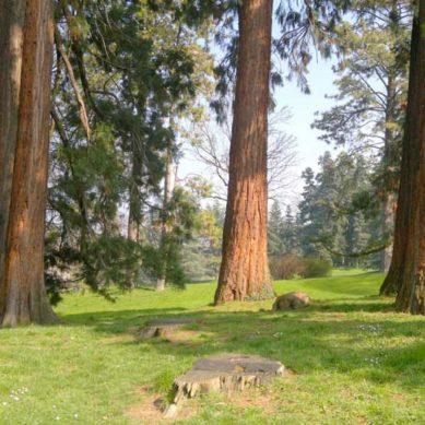 Città di Ginevra: piantare 900 alberi l'obiettivo da raggiungere